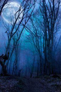 spooky security halloween woods